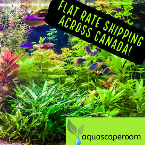 Order Live Aquarium Plants, Hardscape and More 15% Off SALE!
