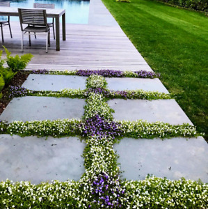 SPRING CLEAN-UP AND LAWN CARE.**WEST ISLAND** 5145717166