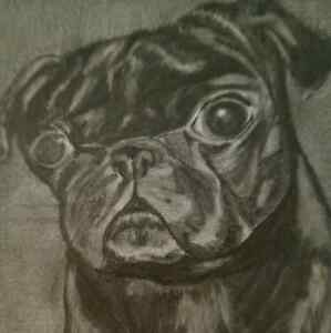 PET PORTRAITS ---hand drawn