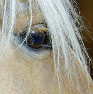 Had a bad experience and thinking about quitting riding lessons?