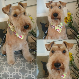 Do you have Scottish Terrier?