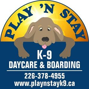 Dog Daycare and Boarding