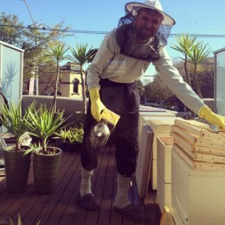Bee swarm and nest removal Carnegie Glen Eira Area Preview