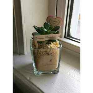Wedding favors, succulents, air plants, cacti, lucky bamboo  Kitchener / Waterloo Kitchener Area image 7