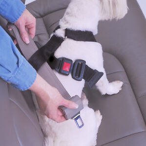 safety restraints for pets in moving vehicles