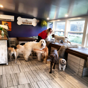 Pet Sitting and Doggy Daycare