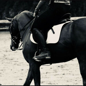 Training board, Breaking and Exercise Riding Available!