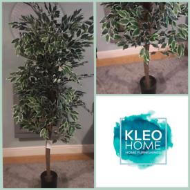 Brand new Artificial 200cm Ficus Tree