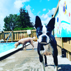 Doggy PlayGround & WaterPark