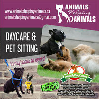 Animals Helping Animals Pet Sitting and Dog Walking Services