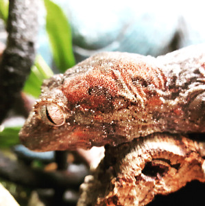Love reptiles? Selling or buying something?