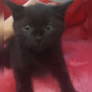 Kittens looking for a loving home