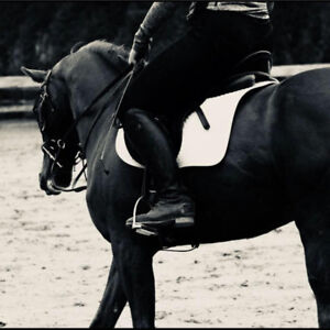 Training Board, Exercise Riding and Breaking available