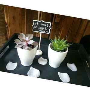 Wedding favors, succulents, air plants, cacti, lucky bamboo  Kitchener / Waterloo Kitchener Area image 5