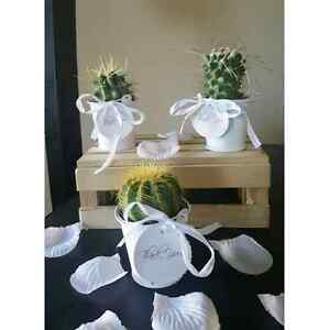 Wedding favors, succulents, lucky bamboo, air plants Kitchener / Waterloo Kitchener Area image 6