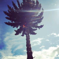 DISCOUNT TREE REMOVAL AND ARBORIST WORK (587-585-8745)