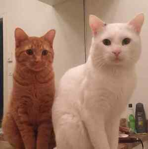 2 chats a donner