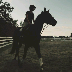Looking for horse to partboard