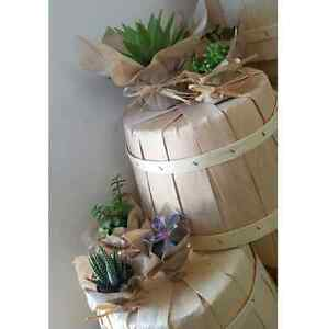 Wedding favors, succulents, air plants, cacti, lucky bamboo  Kitchener / Waterloo Kitchener Area image 2