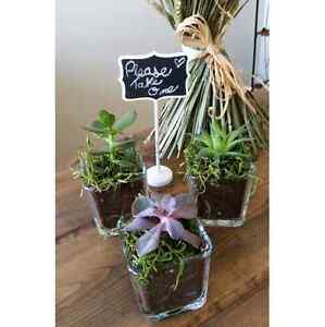 Wedding favors, succulents, air plants, cacti, lucky bamboo  Kitchener / Waterloo Kitchener Area image 10