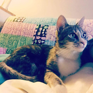 Cat looking for new home