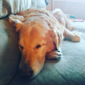 Family in need of pet friendly FULL house