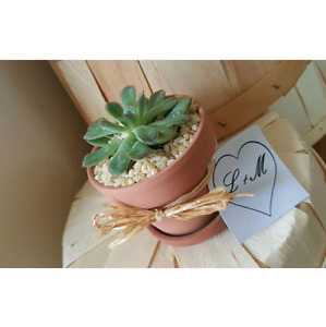 Wedding favors, home decor, succulents, air plants, bamboo