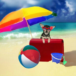 Dog Boarding***Go on vacation with peace of mind***