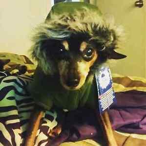 Small  dog coat  Cambridge Kitchener Area image 1
