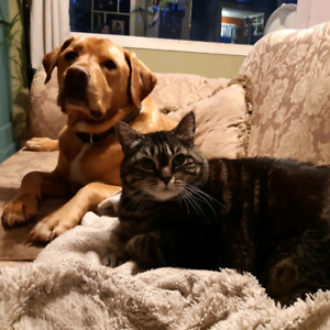 Wanted: 3+ bedroom apartment that's pet friendly