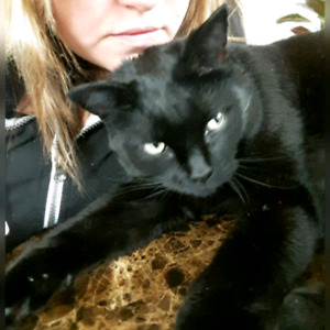 $150 REWARD FOR LOST CAT WHO IS LOVED AND MISSED DEARLY!!