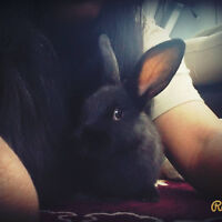Bunny that needs a home