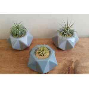 Wedding favors, succulents, lucky bamboo, air plants Kitchener / Waterloo Kitchener Area image 1