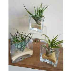 Wedding favors, succulents, air plants, cacti, lucky bamboo  Kitchener / Waterloo Kitchener Area image 9