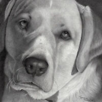 PENCIL PORTRAITS by TRACEY ROSSOL