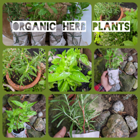 Organic Herbs /Veg Plants