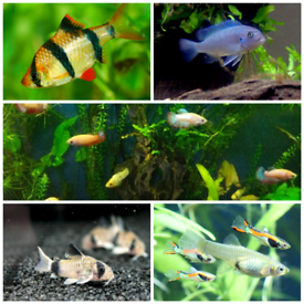 VARIOUS FISH AVAILABLE