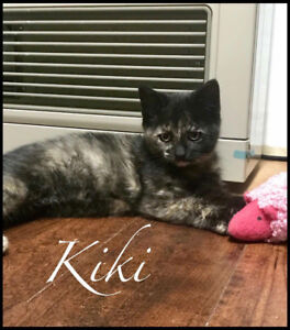 Kiki - Infinity Haven Cat and Kitten Rescue