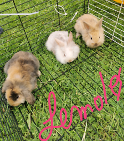Lovely bunny's