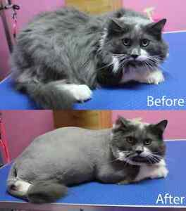 CAT GROOMING available London Ontario image 3
