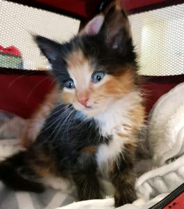 Kittens Ready for Adoption!