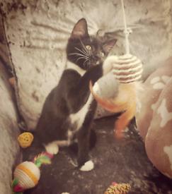 Beautiful kitten READY NOW 🐈💕