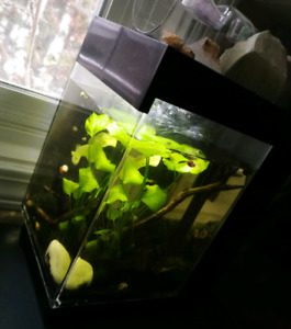 Beta Tank w/Filter & Sand (plant & light NOT included)
