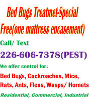 Pest Control Services – Cambridge