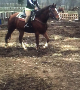 Riding driving horse