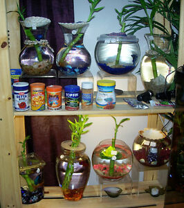 Dwarf Frog/Betta Fish Decorated Homes Sale! ~Betta's By Design