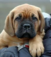 KP Dog Training 25 % OFF