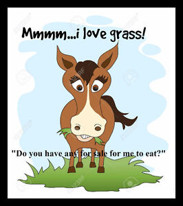Looking to buy pasture grass seed for horses