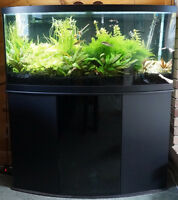 72 gallon bow front tank with custom stand
