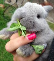 Bébés lapins à donner